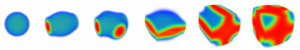 Evolution of the neutron density distribution with the density, for a fixed temperature and proton fraction. From left to right: droplets (gnocchi), rods (spaguetti), cross-rods, slabs (lasagna), tubes (penne), bubbles (swiss cheese). Each shape is shown at the correspondent onset density. Blue (red) color indicates the bottom (top) of the density scale.